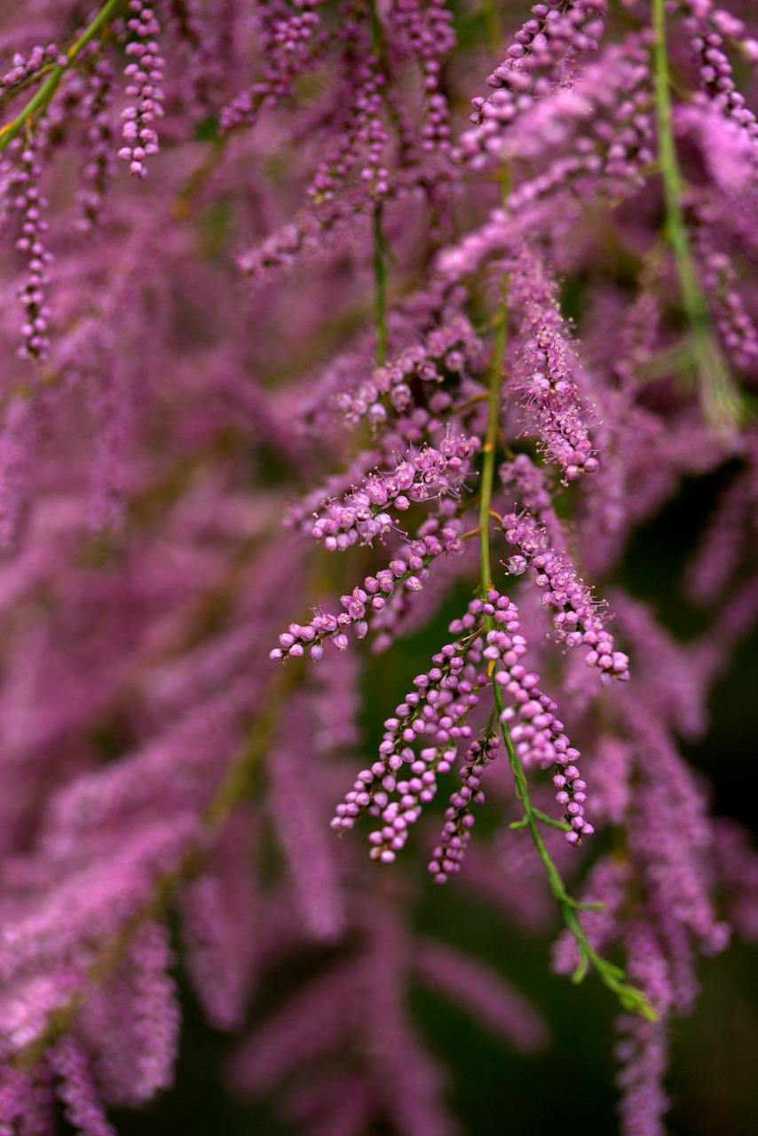 Bac Pour Arbuste De Jardin 15 plantes de bord de mer à découvrir : quelles