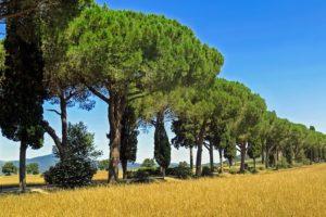 Cyprès, Tuscany, Italie, Pins, Avenue, Paysage, Ciel