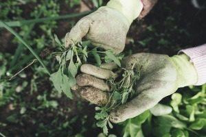Jardinage, Agriculture, Herbe, Plantes, Sur Le Terrain